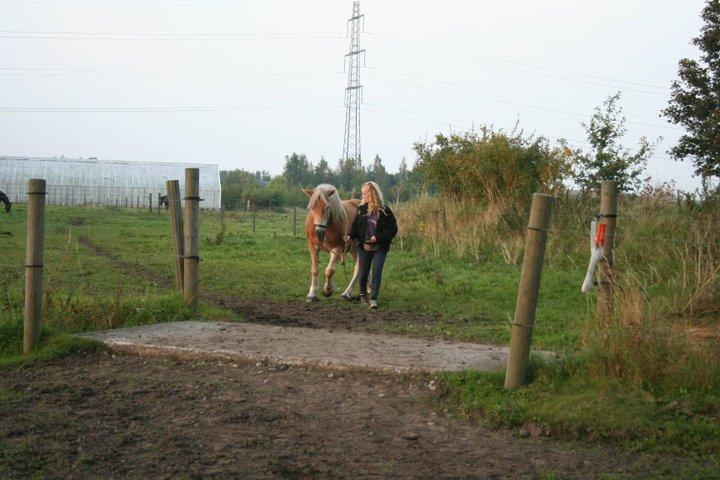 Hesteforstand-Øvelse-i-at-gå-over-broen