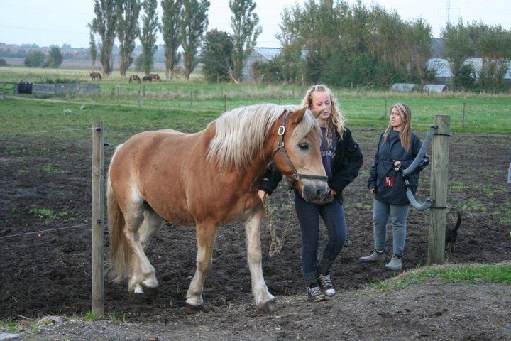 Hesteforstand-øvelse-i-at-gå-gennem-leddet