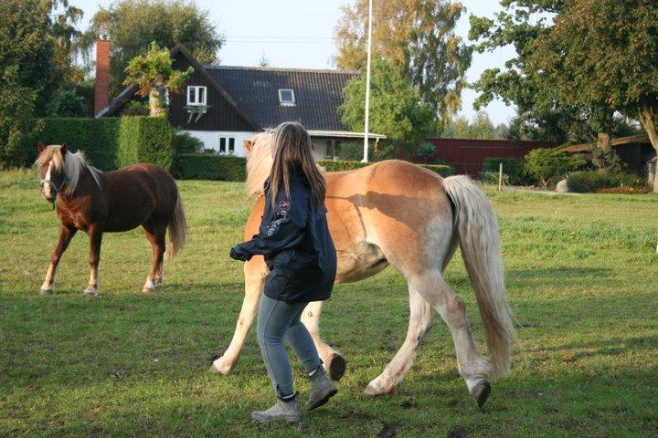 Hesteforstand - hesten løber med mig