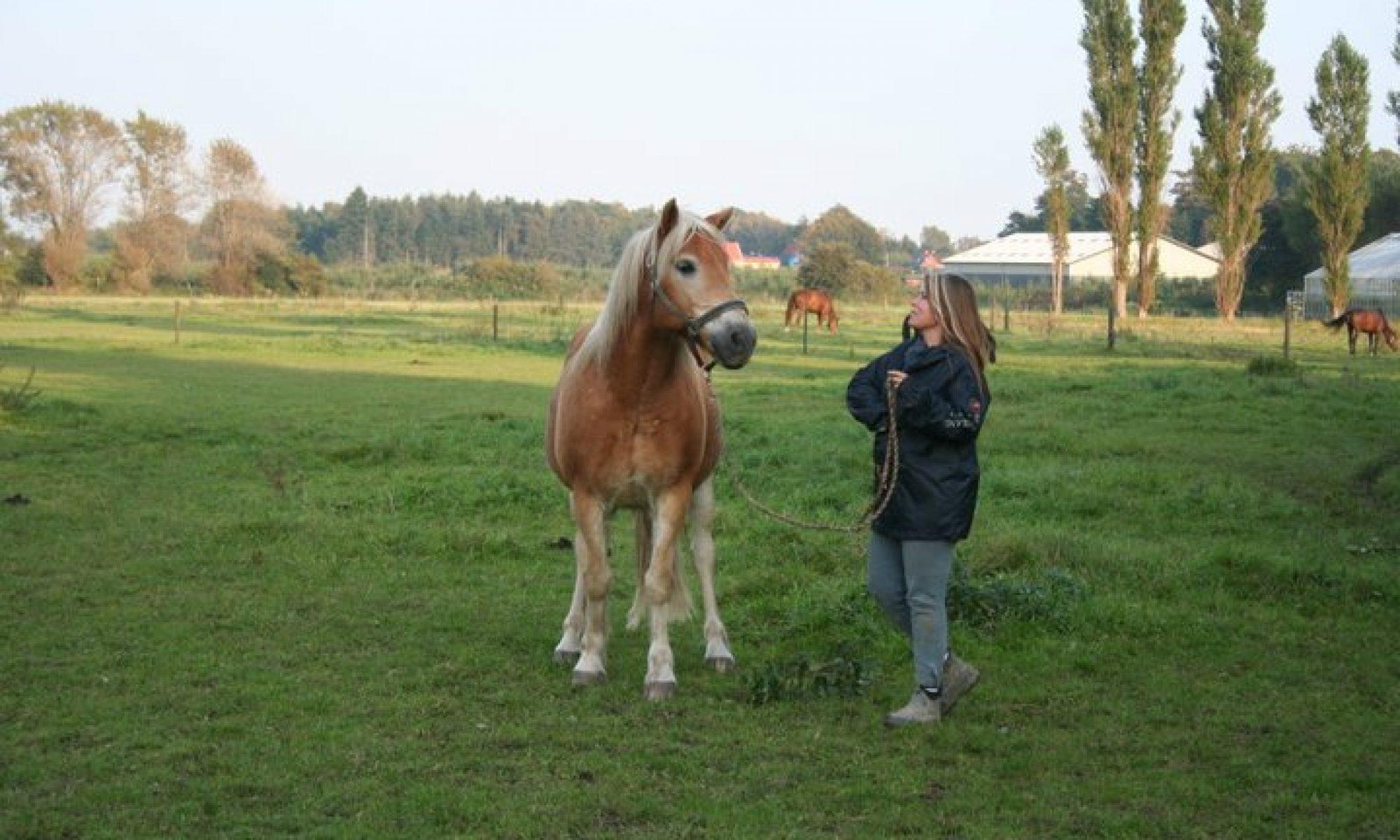 Hesteforstand