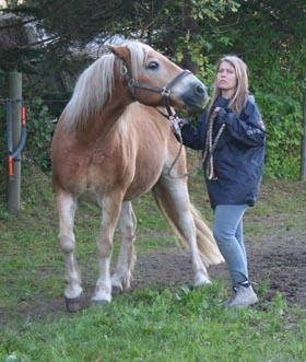 Problemhest, ses tydeligt på hestens ansigtsudtryk