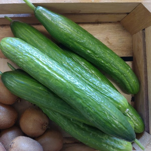 Økologiske agurker