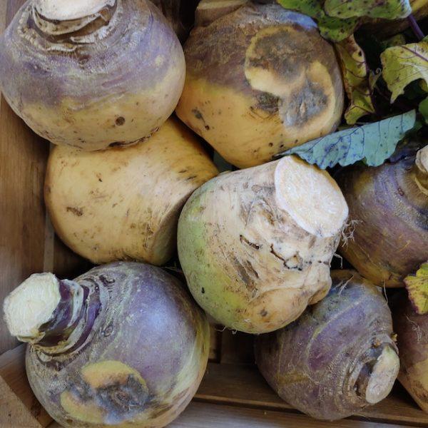 Økologiske kålrabi