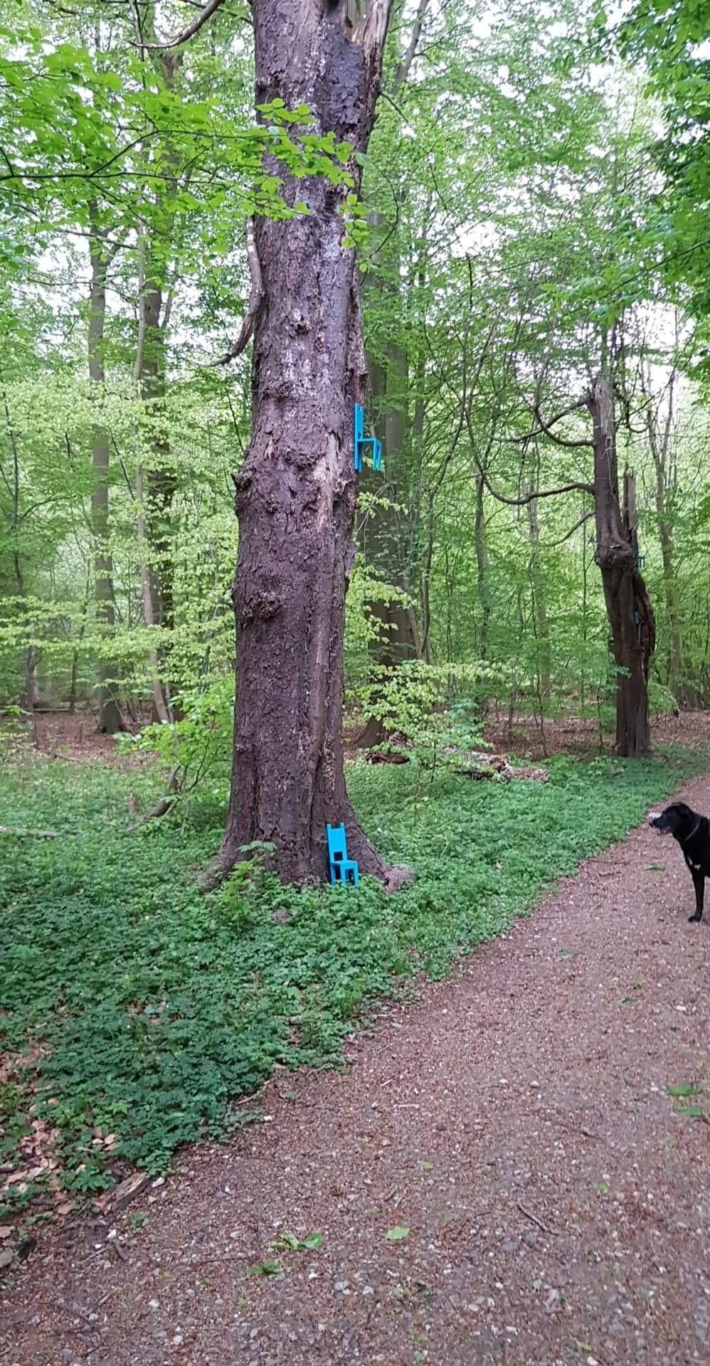 Skov kunst tur. Hvad er nu det ???