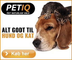 Petiq.dk