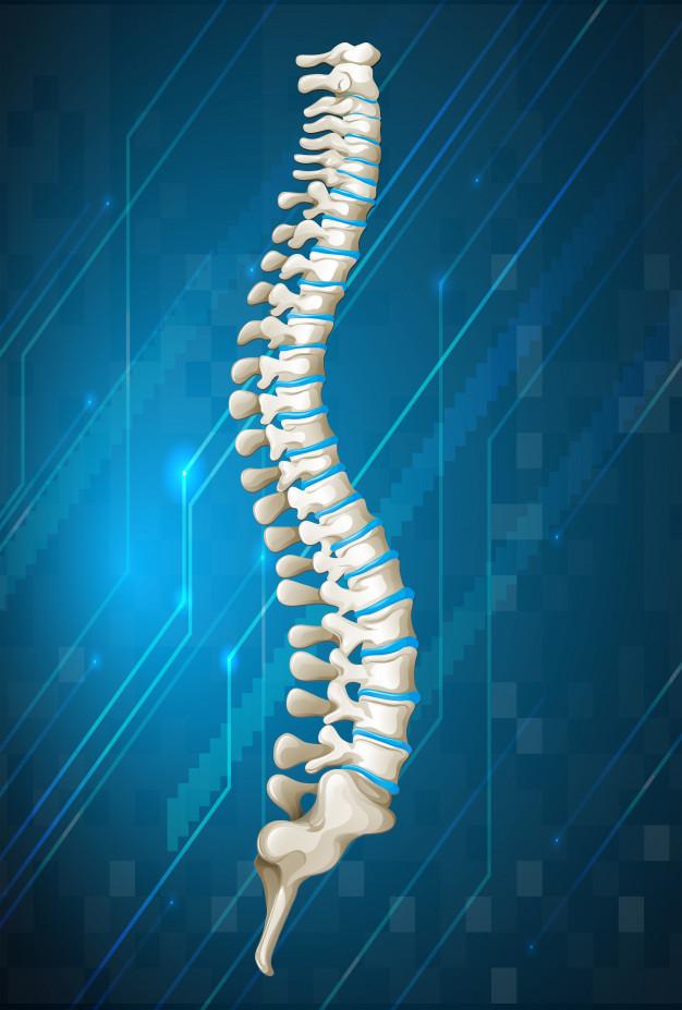 Kiropraktisk Klinik <br/></noscript></noscript><img class=